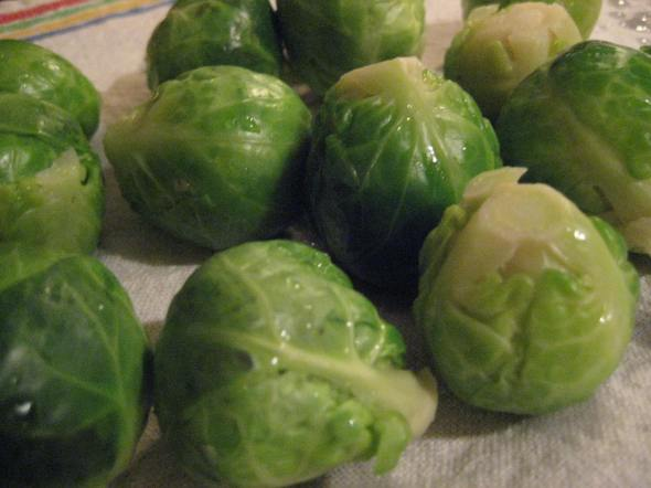 Drying Sprouts