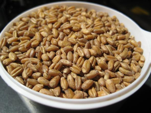 Raw Wheat Berries