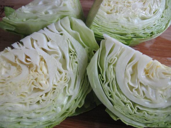 Farao Green Cabbage