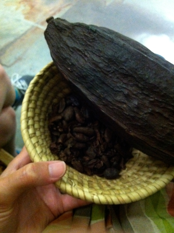 Cacao Bean pod and seeds